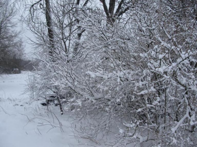 Nr.4. Ziema kā ziema. Tikai maza niansīte - tāda uznāca... 8. aprīlī uz Lieldienām. Tās dienas galerija.