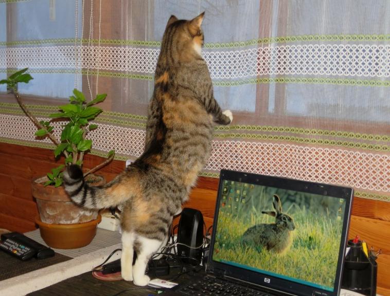 Mana Mīce arvien biežāk izvēlas pagalmu vērot caur logu, nevis doties ārpusē.