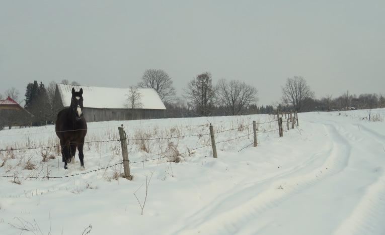 17. februāris, dienas lielāko daļu sniga smalks sniedziņš, uz īsu brīdi caur mākoņiem pavīdēja blāva saulīte.