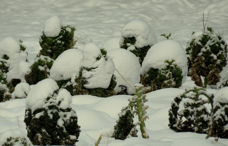 Rudenī nenovāktie dārzeņi tiem kā bezmaksas ledussskapis.
