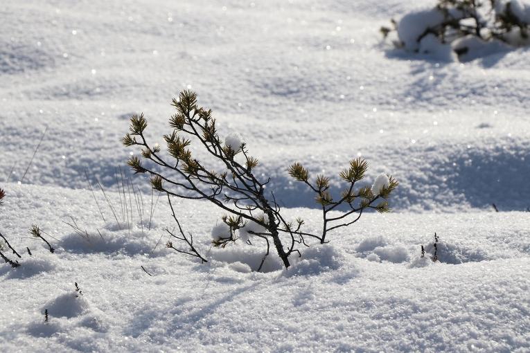 Mākoņiem paklīstot, visapkārt vizuļo sniega sega
