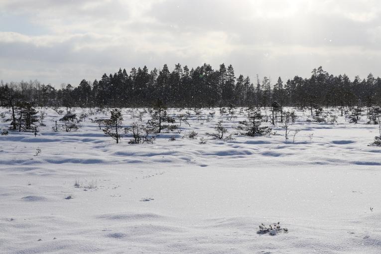 No mākoņiem birst sīkas sniegpārslas
