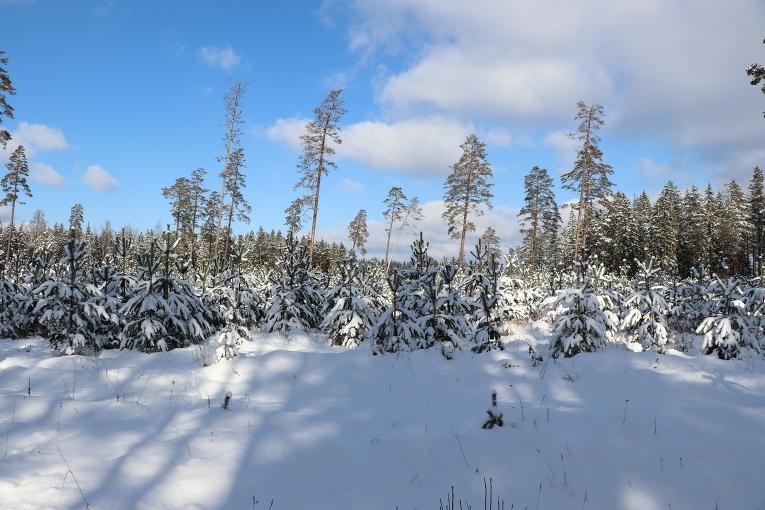Sniegs, sals, saule un zilas debesis