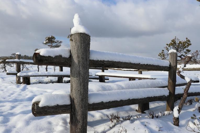 Sniega segas biezums aptuveni līdz potītēm