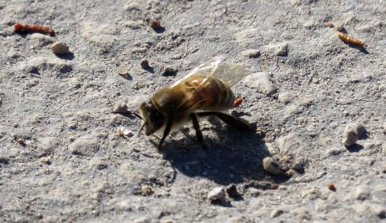 Bites izlidojušas no stropiem un tīra vēderiņus, visa tuvākā apkārtne izraibināta maziem, brūniem pleķīšiem.