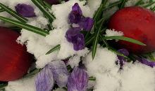 Vai kārtējās sniegotās Lieldienas?
