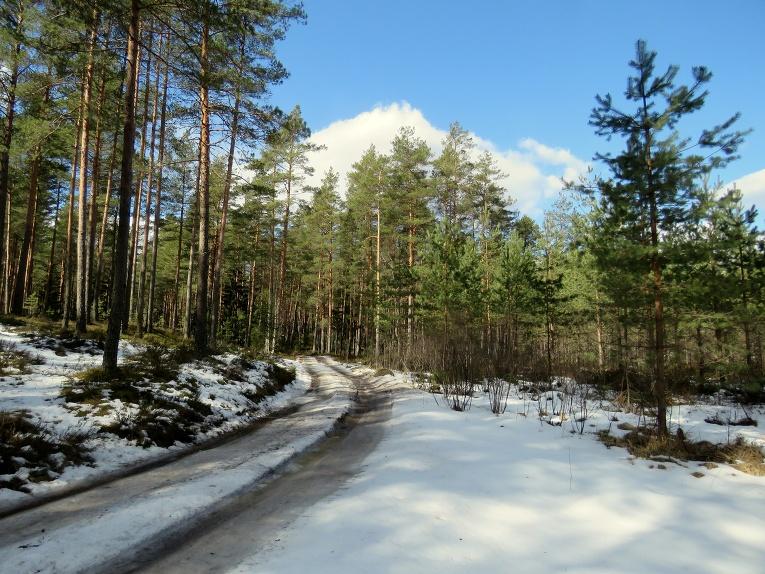 Arī mežā vēl pietiekami daudz sniega un ledus.