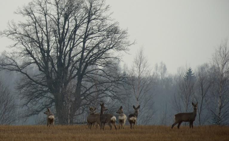 4.aprīlis - sniegs uz laukiem nokusis, dūmaka, brīžiem smidzina.