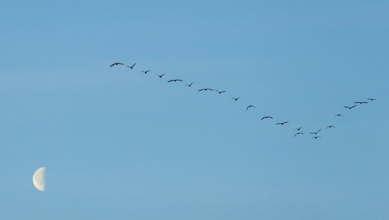 8. aprīlis neilgi pēc saullēkta, debesīs skan putnu sasaukšanās..