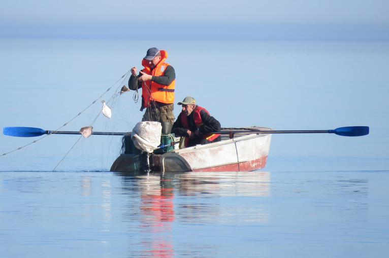 Piekrastes zvejnieku tīklos labi ķeras akmensbutes.