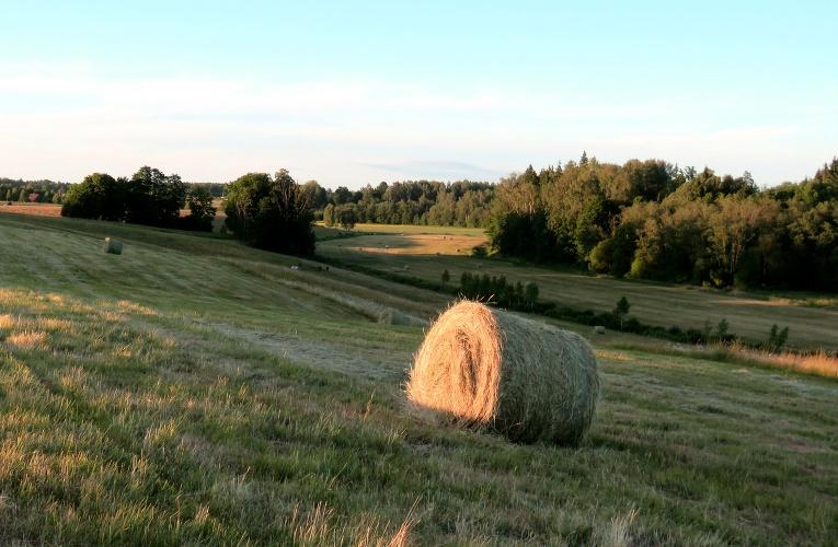Toties siens šogad zemniekiem savākts rekordagri.