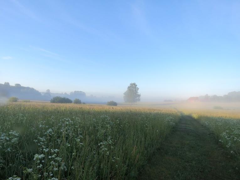 13. jūnija rīts, pēc iepriekšējas dienas lietus ielejā maza migliņa.
