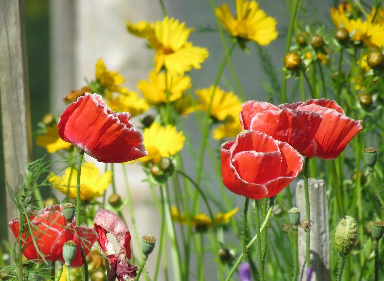 Pēc iepriekšējās nedēlas lietiem Siguldas puses dārzos mitruma pašlaik pietiekami.