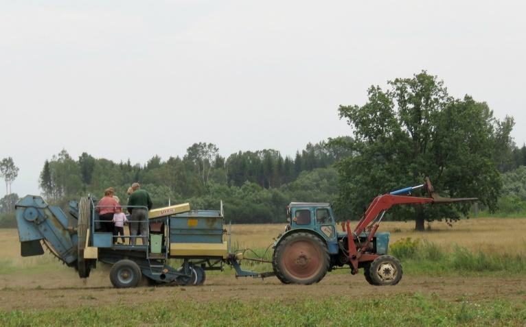 Allažu zemnieki steidz novākt ražu, kartupeļu kombainu var izmantot arī ķiploku vākšanai.