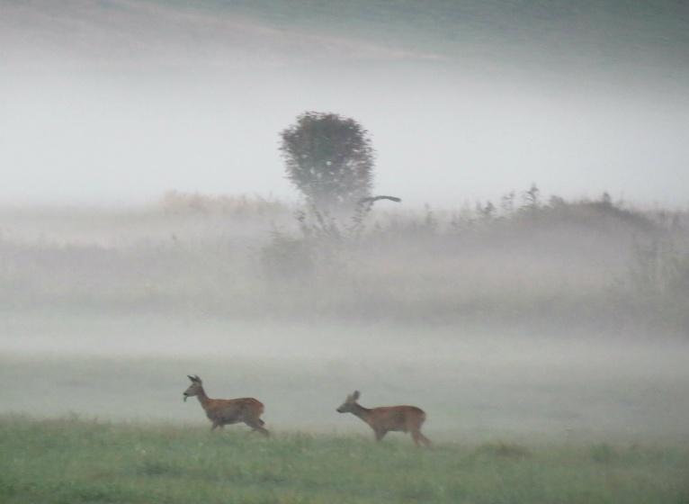 Ielejas attālā ganās stirnas.
