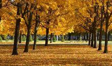 Klāt zelta rudens!