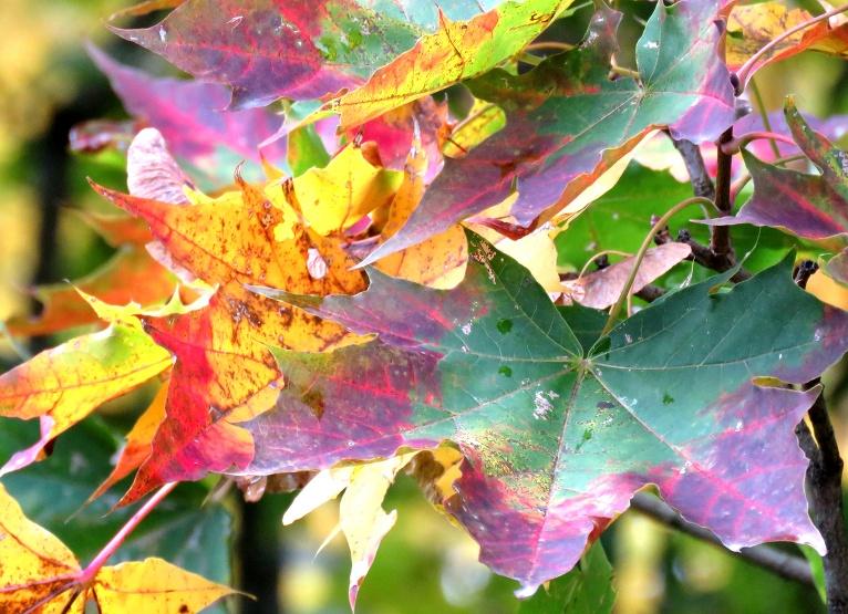 Rudens šogad ar krāsām neskopojas!