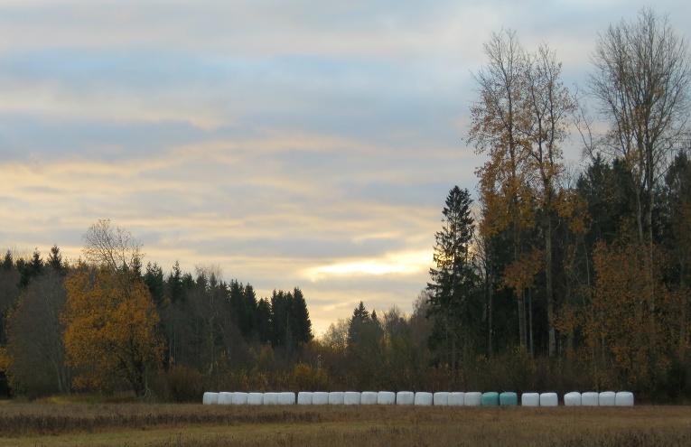 4. novembra rīts, mākoņi atkal neļauj izlausties cauri saules stariem.