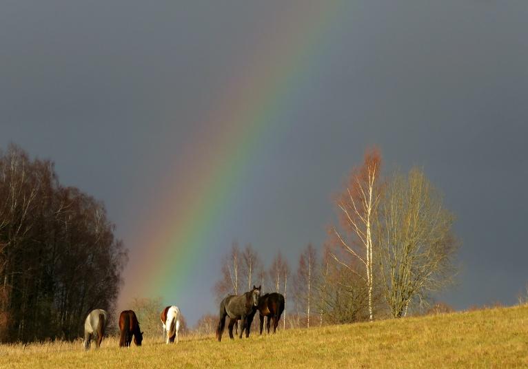 Latvijas dzimšanas dienā - skaista svētku varavīksne.