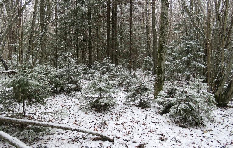 Arī mežā jau ziemīgas sajūtas.