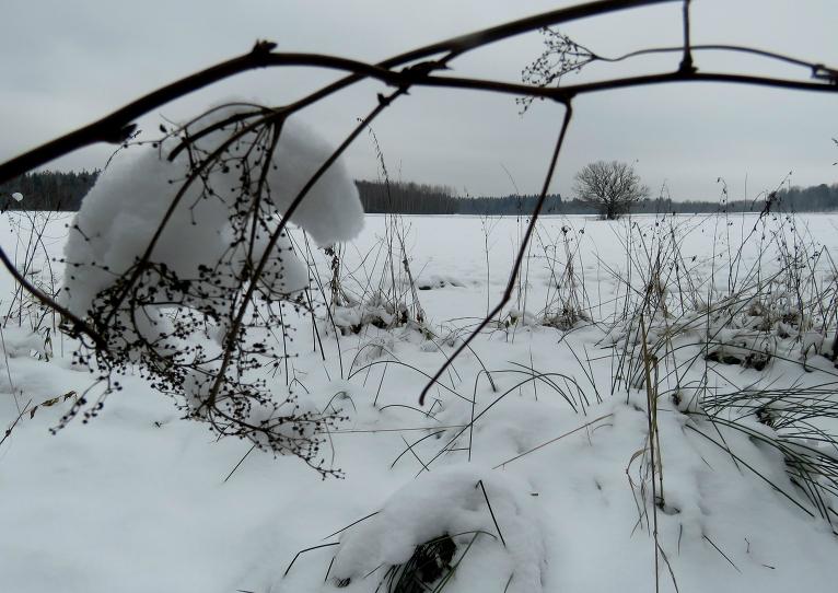 Ziemssvētku vecītis šogad varēs brist pa baltu sniedziņu.