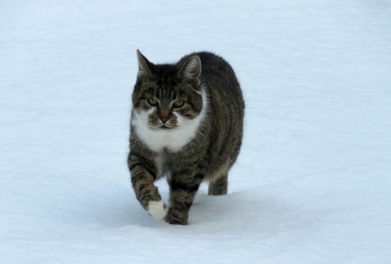 Gada pēdējā diena iepriecināja ar svaigu, baltu sniedziņu.