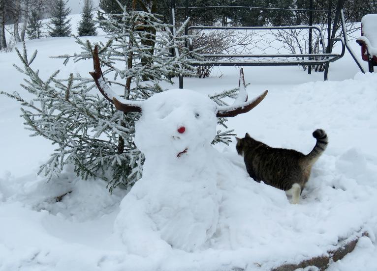 Ziemassvētku eglīte no istabas pārcēlusies ārā, Mīce ātri pārbauda, un tūlīt atpakaļ mājā, neies taču ķepas saldēt!