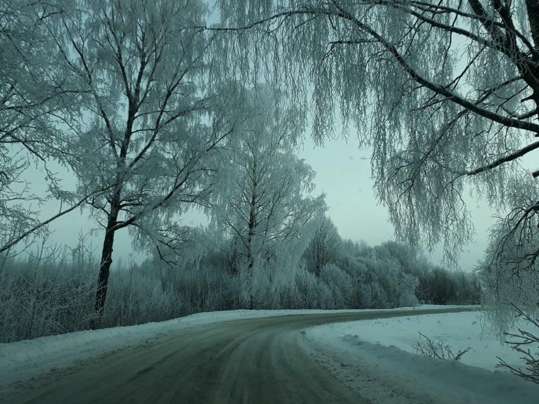 Aiz krūmiem vajadzētu būt mežam, bet migla visu paslēpusi. Bilde bēdīgas kvalitātes, jo bildēts caur auto logu un steigā, vieta nepārredzama.