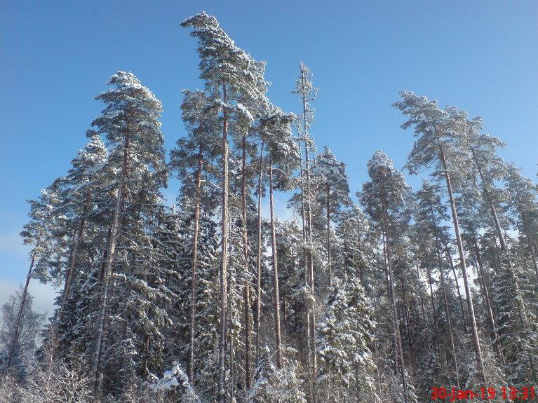 Klasisks ziemas skats