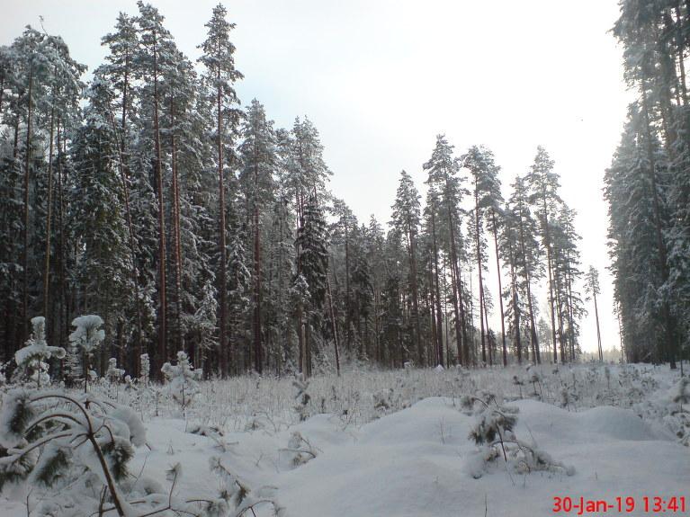 Mainīgs mākoņu daudzums. Sniega klāti pieauguši un jaunie koki.