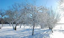 Ziemas ainas