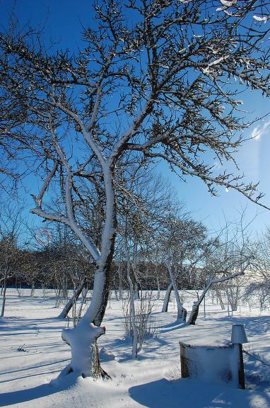 12. februāra sniegi.