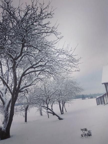 Balta pasaule 10. janvārī, Viesatas.