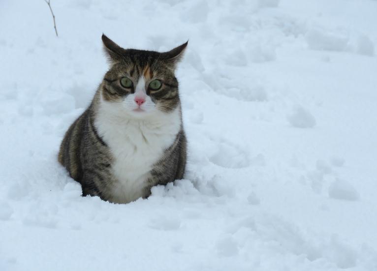 Saimniec, tu laikam vēl nevesela, nu kurš prātīgs lopiņš pa tādu sniegu apkārt staigā?