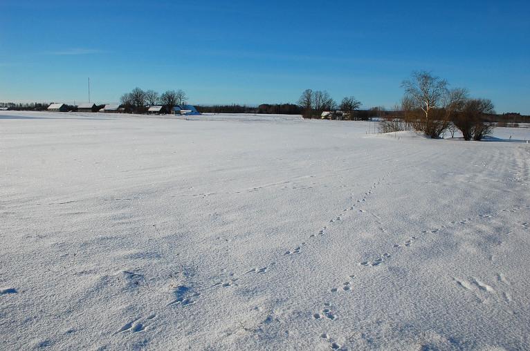 Sniega klajs, 16. janvāris, Viesatas.