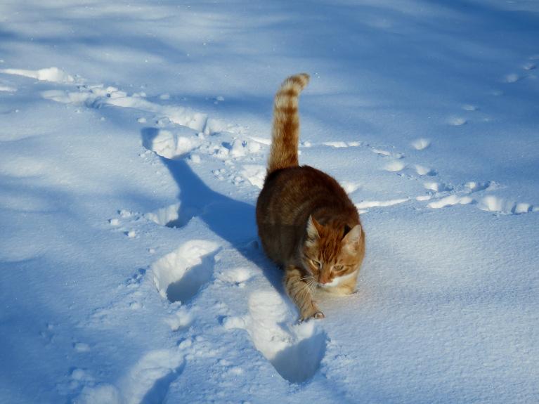 Rūdis piekrīt Mīcei- šitāds sniegs nav priekš kaķiem!