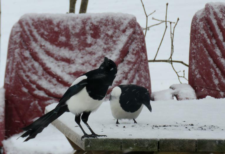 13/ februāris, snigšana atsākas.