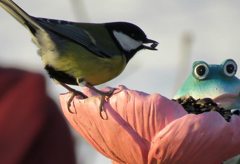 Putnu skaits barotavā sāk mazināties.