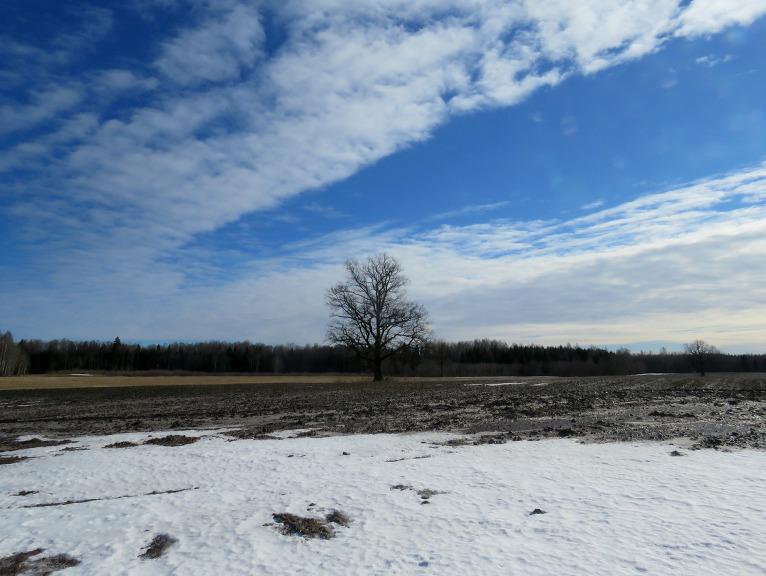 Ēnainākās  vietās uz laukiem vēl sniega pleķi.