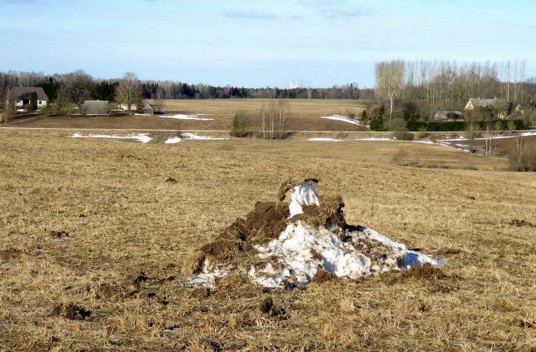 Saulainās vietās sniega pavisam maz. Kūstošās sniega čupas uz laukiem izskatās amizanti.