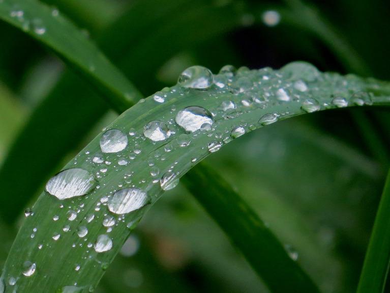 28. maijā pa dienu līst, vakarpusē lietus piestāj.