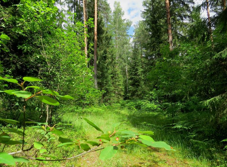 Meža mitruma vēl nav pārāk daudz.