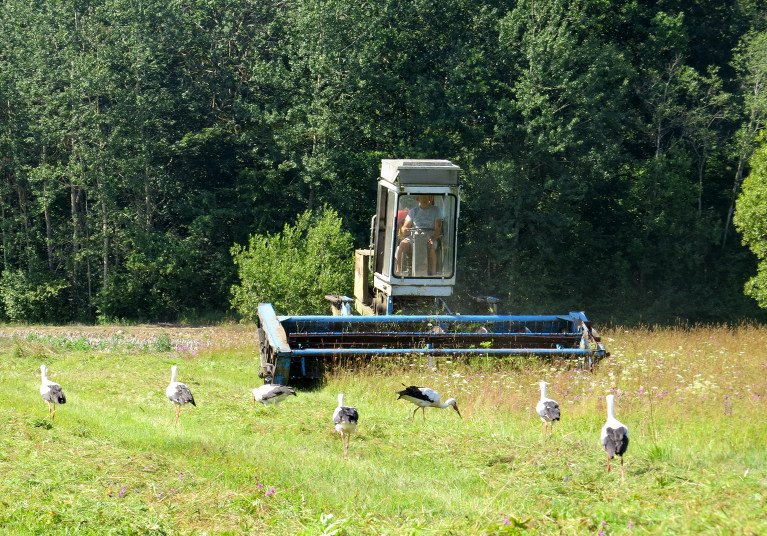Kur traktori, tur stārķu bari.