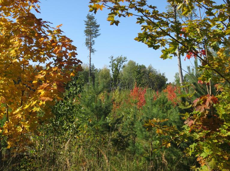 Sāk iekrāsoties koku lapas