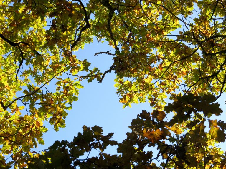 27. septembra saulainā pēcpusdiena