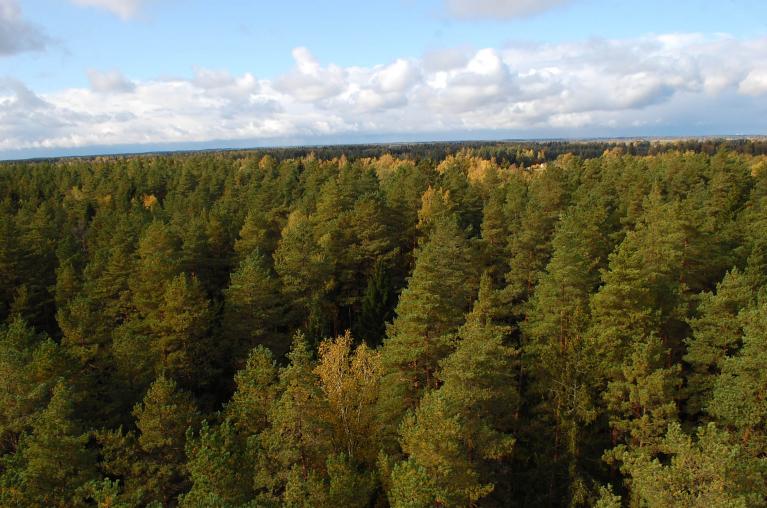 Skats no Ložmetējkalna skatu torņa