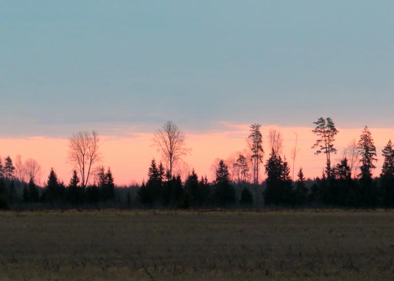 Vairākus rītus debess mala krāsojās sārtos toņos. lai pēc tam ieslīgtu atpakaļ drūmajā pelēcībā.