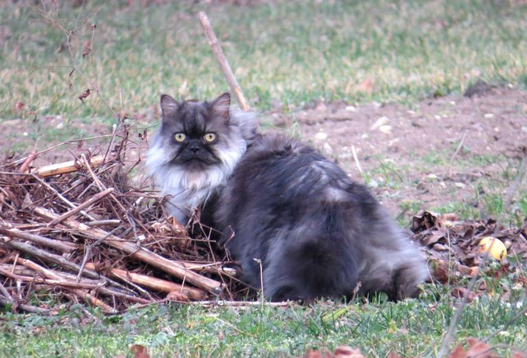 Kaimiņienes kaķene, dzenoties pakaļ putniņiem, ieklīdusi kaimiņdārzā. Izskatās, ka arī viņai nepatīk kailsals.
