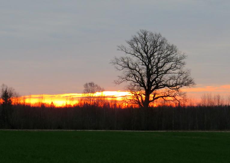 23. novembra rīts, saule palūr caur mākoņa maliņu.