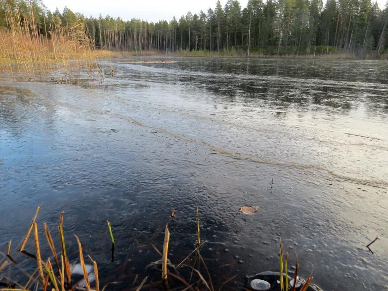 Plāna ledus kārtiņa arī meža ezeriņam.